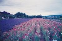 1995.7富良野.jpg