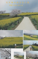2007.4.4白木峰菜の花.jpg