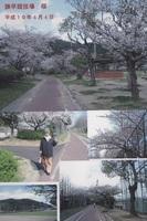 2007.4.4諫早競技場 桜.jpg