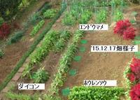 '15.12.17畑様子�@.JPG