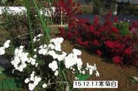 '15.12.17畑様子�B.JPG