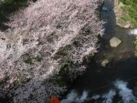 '15.3.29橘神社�A.JPG