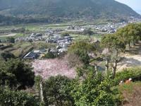 '15.3.29橘神社�F.JPG