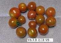 '15.7.3ミニトマト.JPG