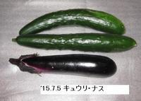 '15.7.5キュウリ・ナス.JPG