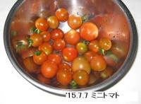 '15.7.7ミニトマト.JPG