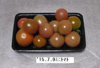 '15.7.9ミニトマト.JPG