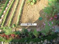 '15.9.27大根の様子.JPG