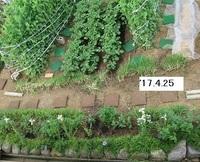 '17.4.25畑�B.JPG