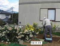 '18.11.14畑菊.JPG