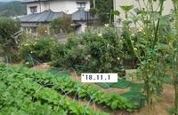 '18.11.1畑菊�A.JPG