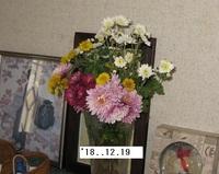 '18.12.19切り花菊.JPG