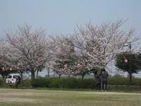 '18.3.26森山町花見�D.JPG