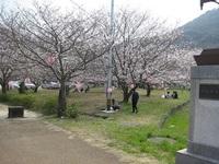 '18.3.26森山町花見�I.JPG
