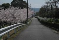 '18.3.28散歩桜�B.JPG