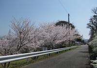 '18.3.28散歩桜�C.JPG