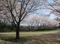 '18.3.28散歩桜�G.JPG