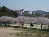 '18.3.28散歩桜�I.JPG