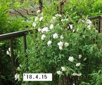 '18.4.15花壇花�A.JPG