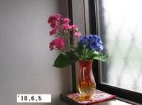 '18.6.5切り花�A.JPG