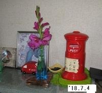 '18.7.4グラジオラス切り花.JPG