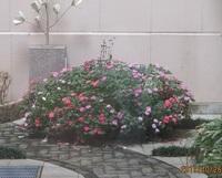 '19.10.26施設の中庭の花壇.JPG