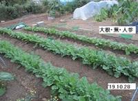 '19.10.28大根・蕪・人参.JPG