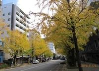 '19.11.26長崎市民会館横銀杏の紅葉.JPG
