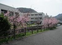 '19.3.29スポーツセンター桜�@.JPG