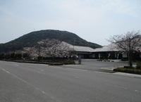 '19.3.29森山図書館桜.JPG