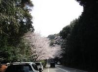 '19.3.29森山街道桜�@.JPG