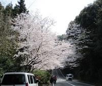 '19.3.29森山街道桜�B.JPG