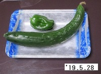 '19.5.28キュウリ・ピーマン.JPG