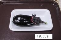 '19.6.2ナス.JPG