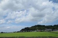 '19.7.12森山田んぼ.JPG