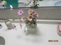 '20.10.25菊とコスモス.JPG