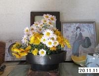 '20.11.11菊活花.JPG