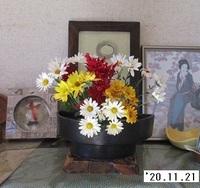 '20.11.21菊活花.JPG