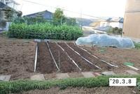 '20.3.8ジャガイモ畝作り.JPG