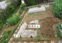 '20.4.19畑の様子.JPG