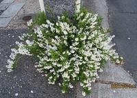 '20.4.30春の花�A.JPG