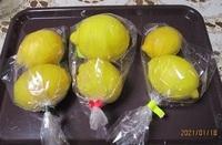 '21.1.18レモン.JPG