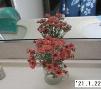 '21.1.22寒菊.JPG