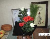 '21.1.26菊と寒菊.JPG