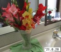 '21.6.20挿し花.JPG