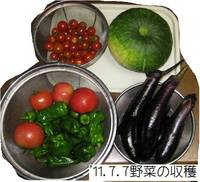 '11.7.7野菜の収穫.jpg