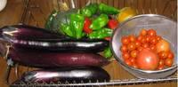 '11.8.20野菜収穫.jpg