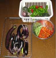 '11.8.31収穫野菜.jpg