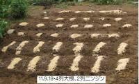 '11.9.18大根と人参の種播き.jpg