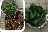 '12.2.26野菜収穫.jpg